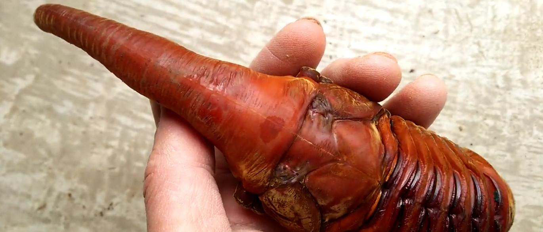 Resultado de imagem para Besouro de aspecto alienígena encontrado no Japão