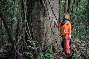 Brasil ocupa 18ª posição em economias verdes entre 60 países