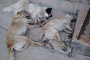 Mais de 100 cachorros encontrados mortos no RS