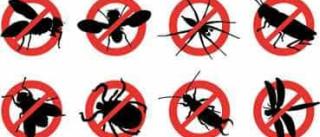 Dicas para afastar formigas, moscas e baratas da sua casa