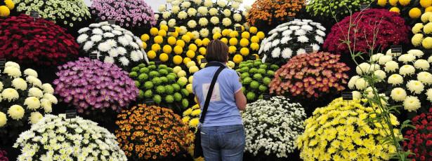 Índice de preços ao produtor avança 0,26% em fevereiro