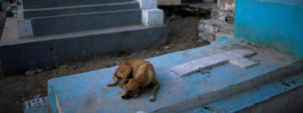 Lei poderá aprovar que animais sejam sepultados com seus donos