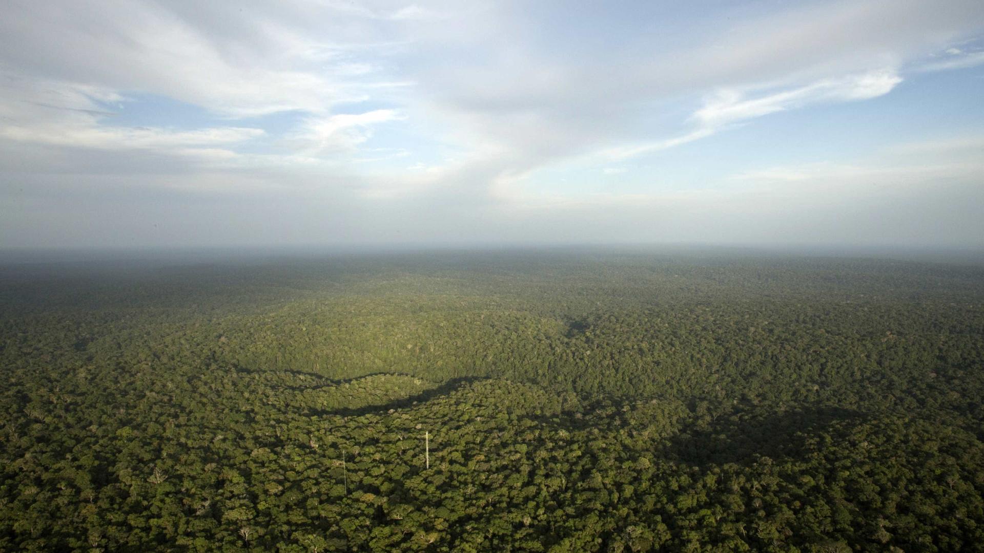 Desmatamento da Amazônia cresce, em um ano, cinco cidades de SP
