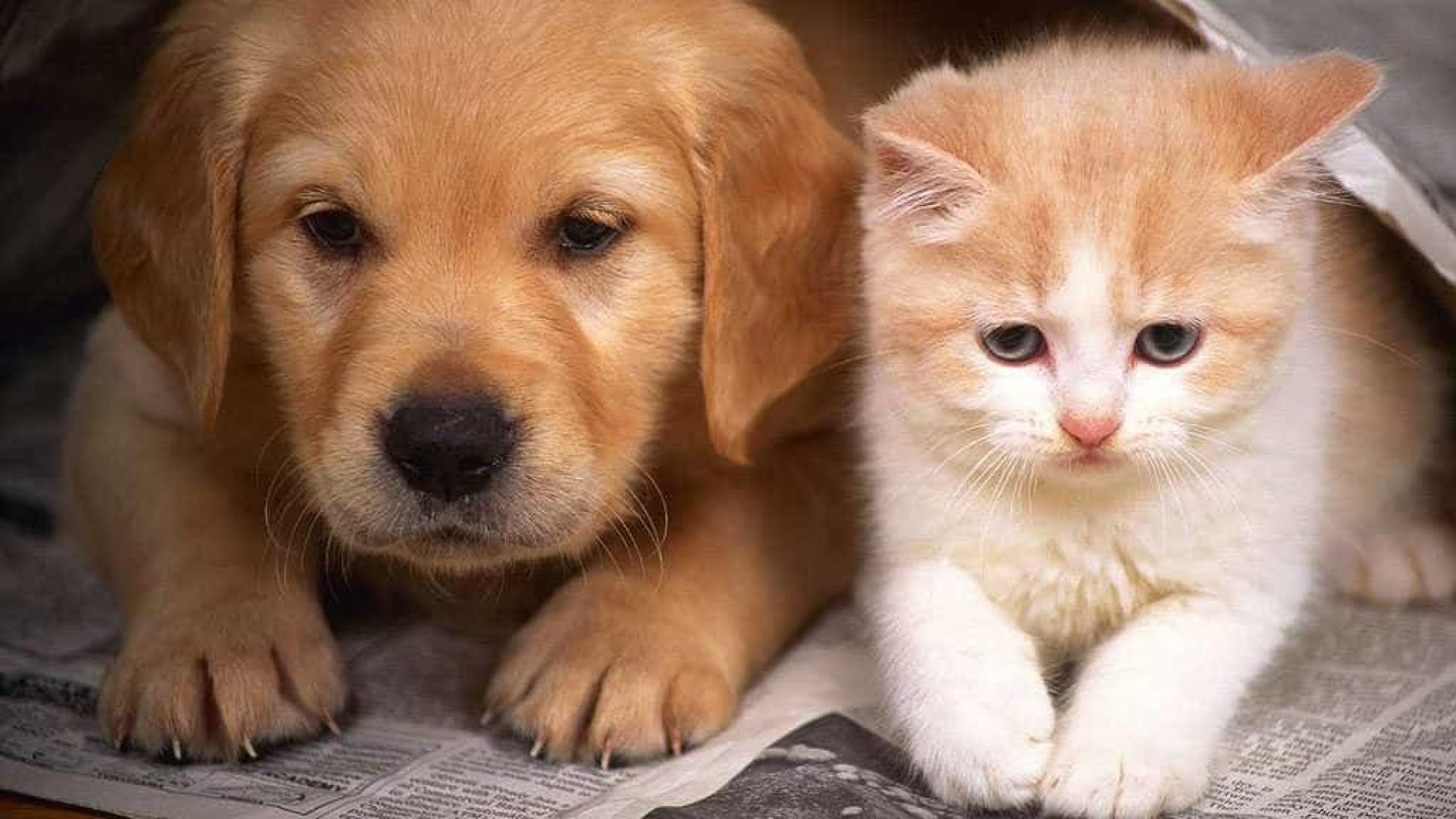 Cães e gatos são achados mortos com sinais de tortura no interior de SP