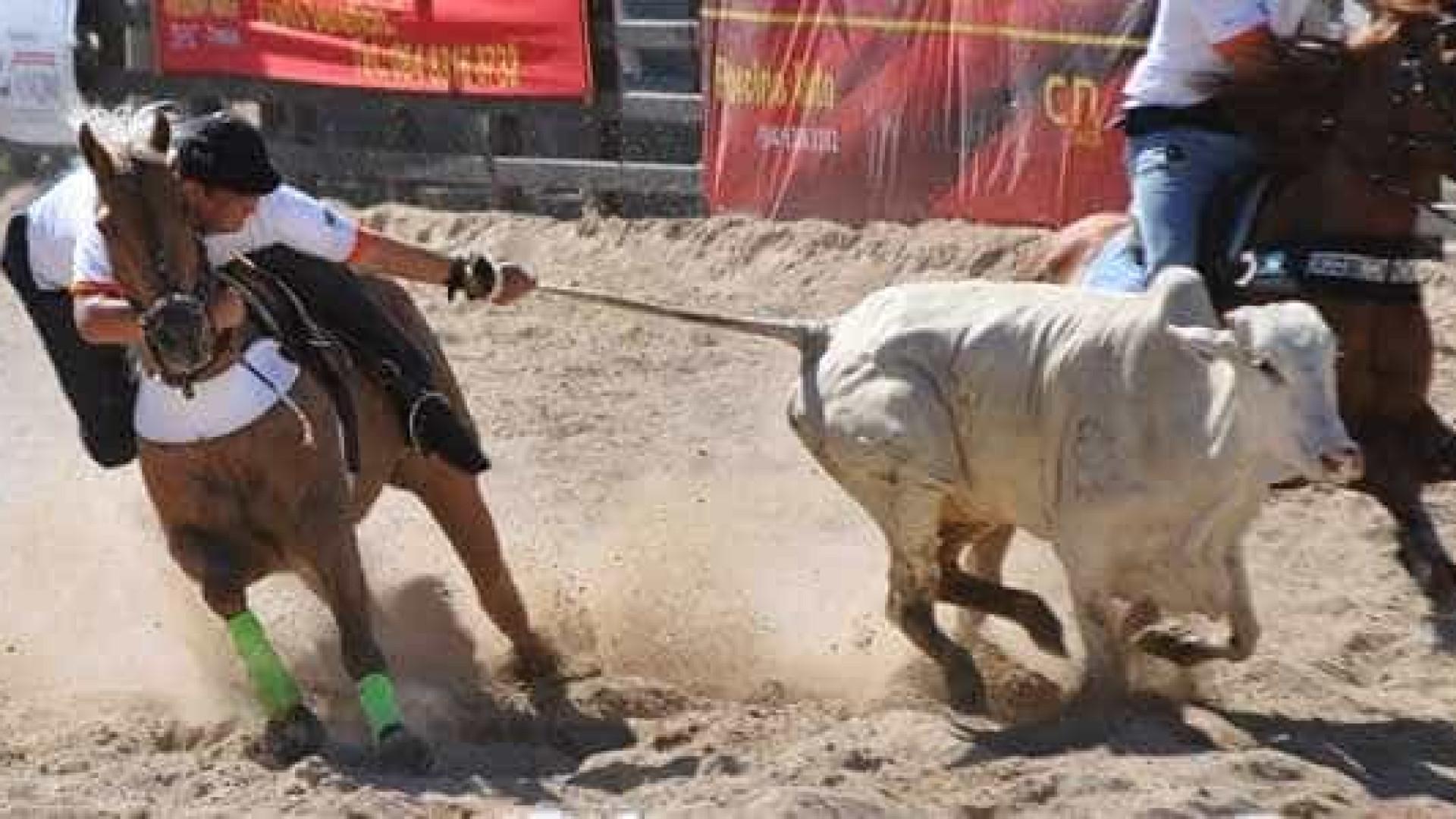 Rodeio de Barretos busca 'padrão Fifa' e celebra PEC da vaquejada