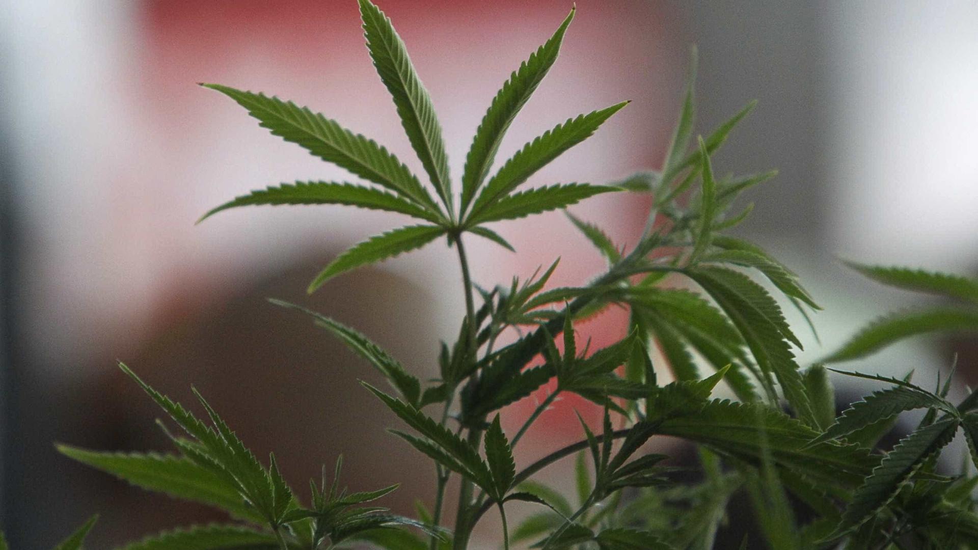 Senado do Canadá aprova legalização da maconha