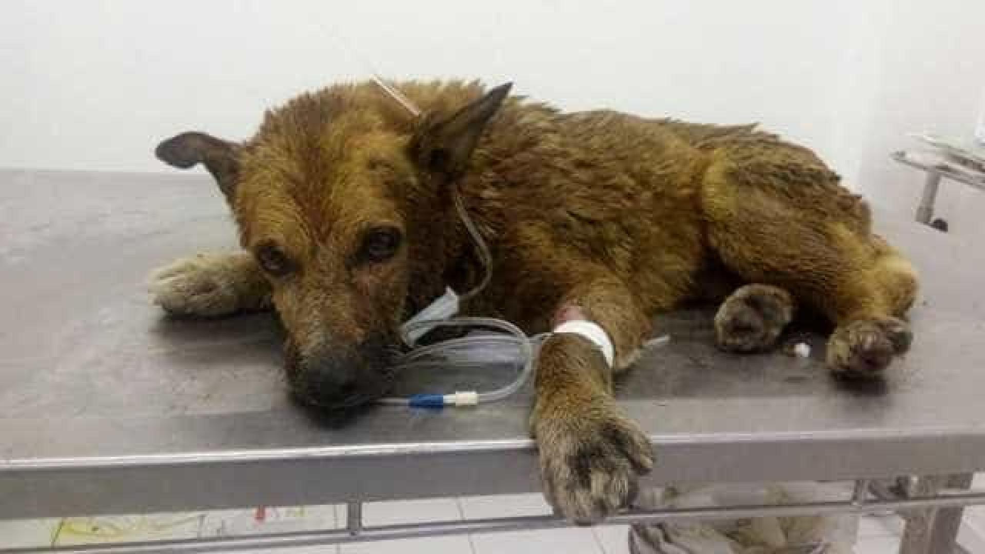Cachorro resgatado em canal em Niterói não resiste e morre