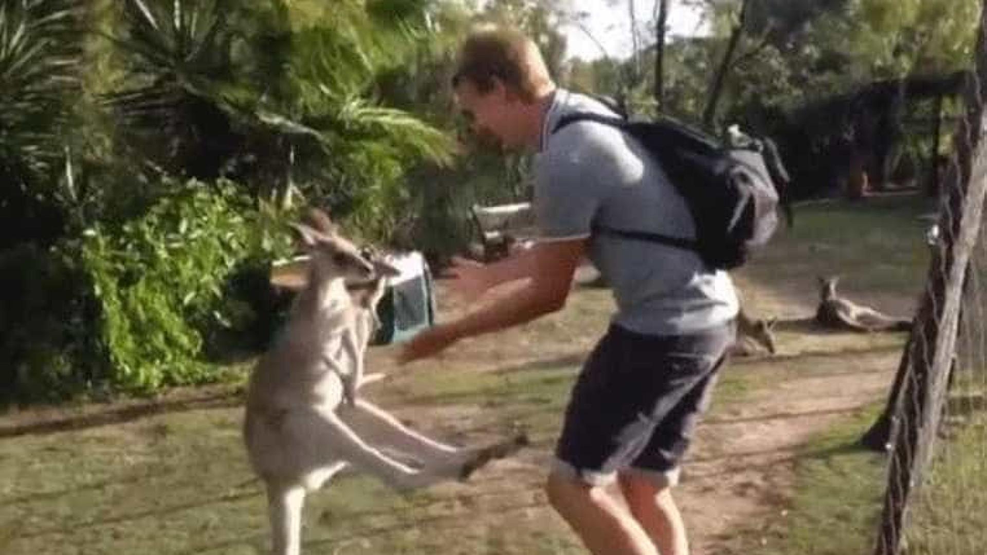 Canguru ataca turista em santuário na Austrália; assista!