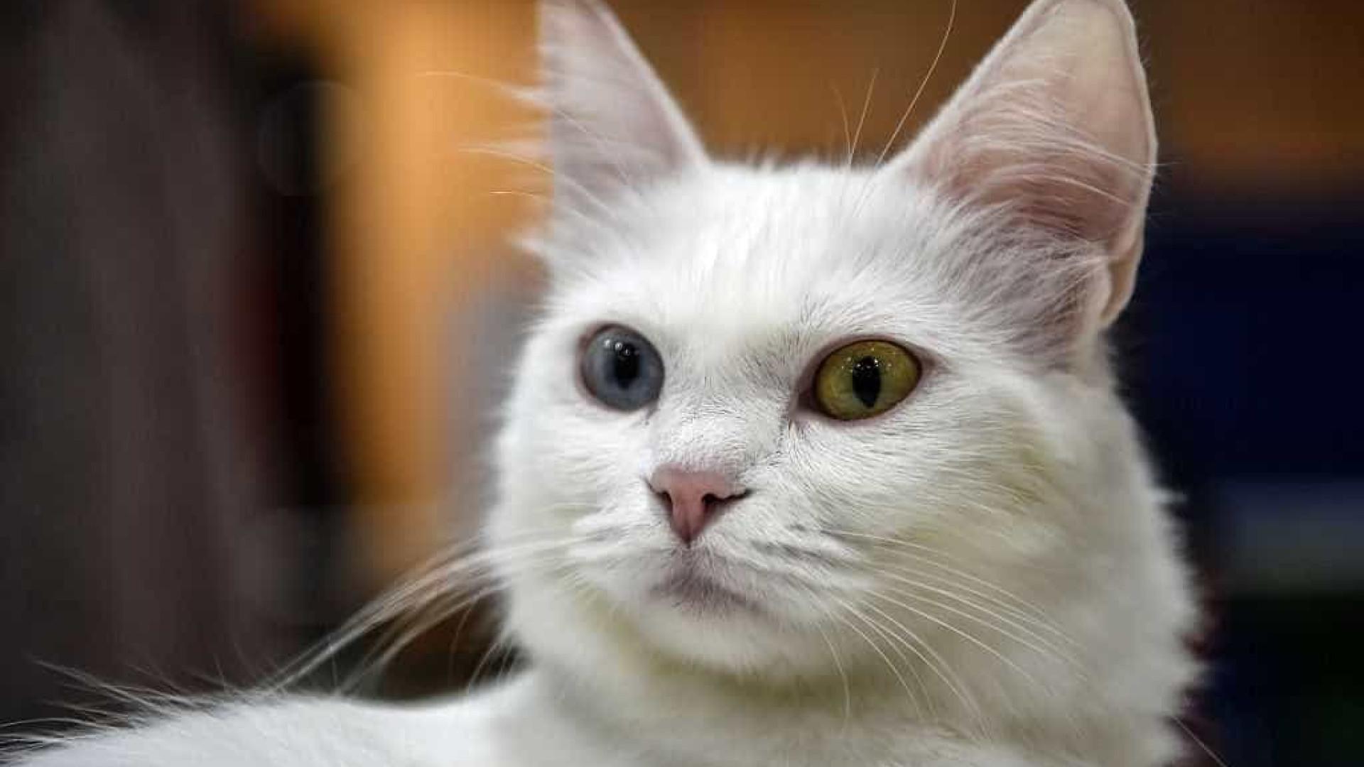 Polícia investiga extermínio de gatos em condomínio de luxo no Rio