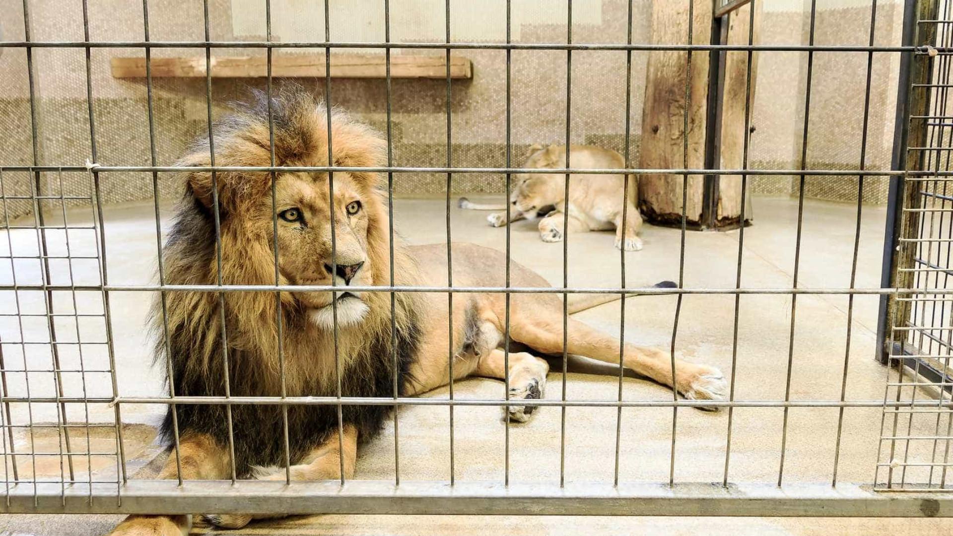 TripAdvisor deixa de vender ingressos  de atrações com animais