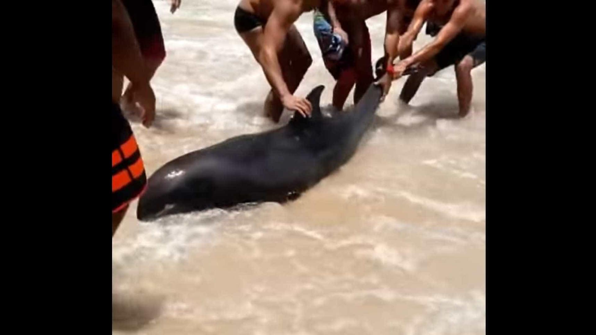 Banhistas resgatam golfinho em praia fluminense; assista!