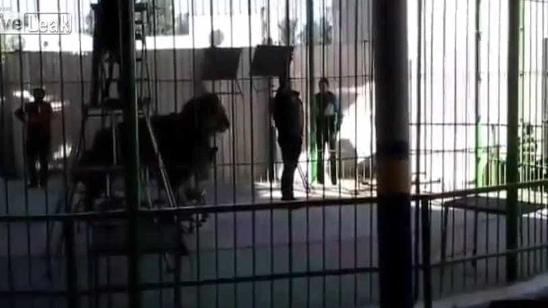 Leão ataca e mata domador durante espetáculo; vídeo