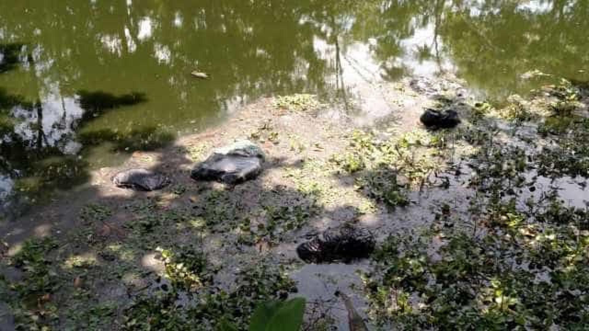 Pai, mãe e filha de 6 anos morrem afogados após carro cair em rio