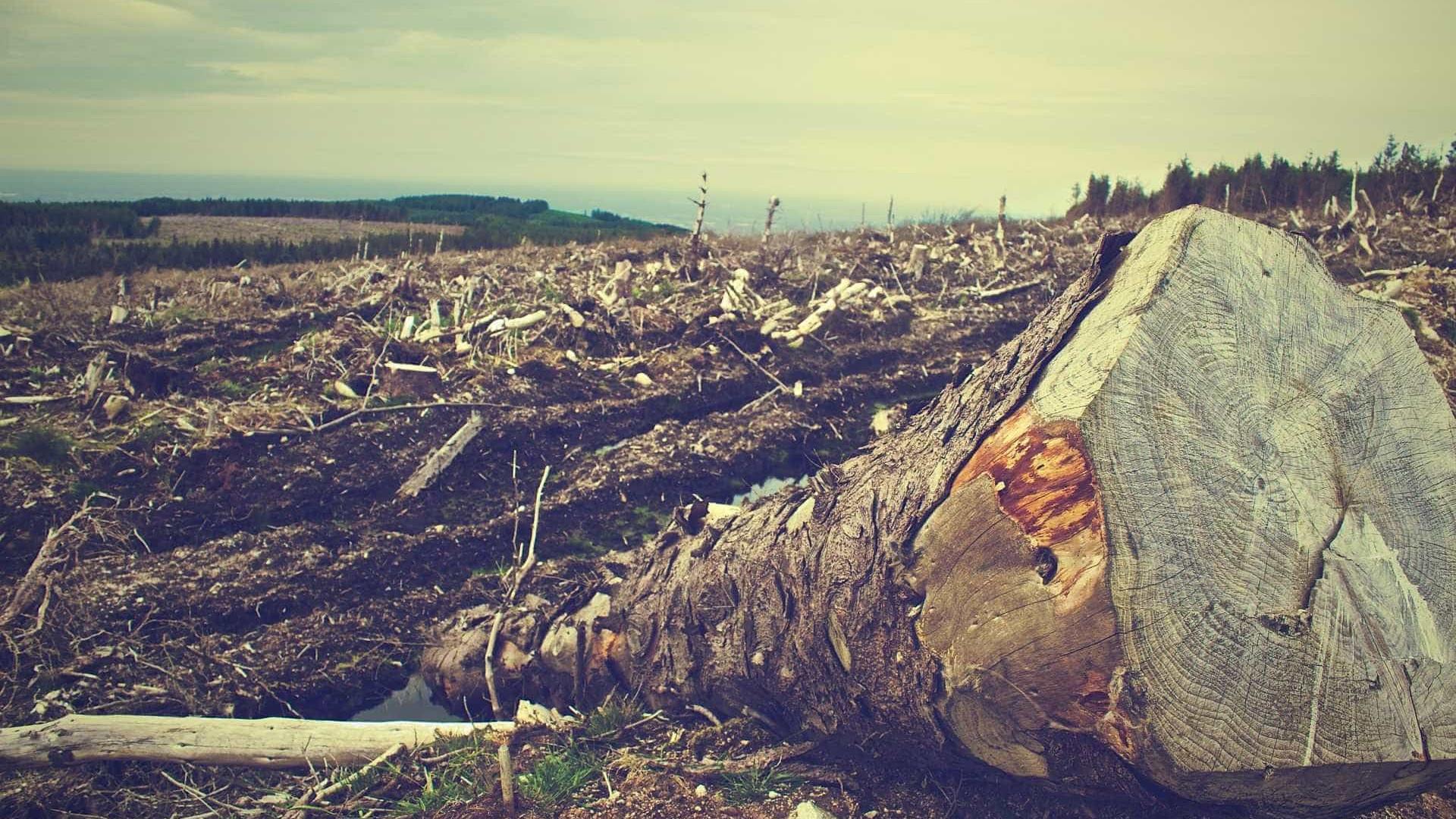Desmatamento na Amazônia cresce 14% e é o maior desde 2008