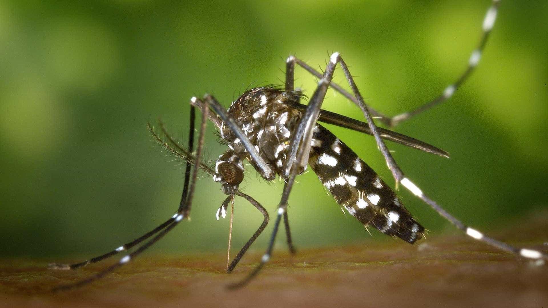 Em 3 meses, casos de chikungunya quase superam total do ano passado