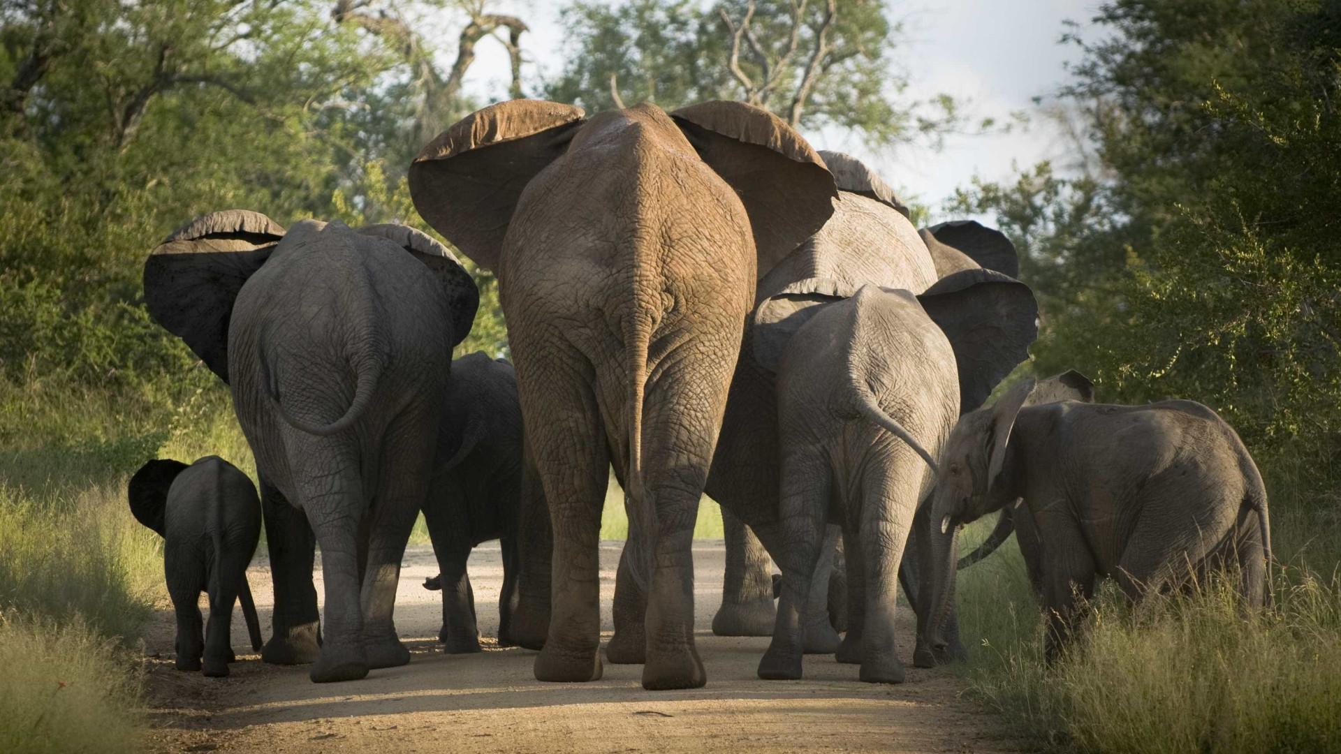 Caçadores de elefantes matam seis soldados nos Camarões