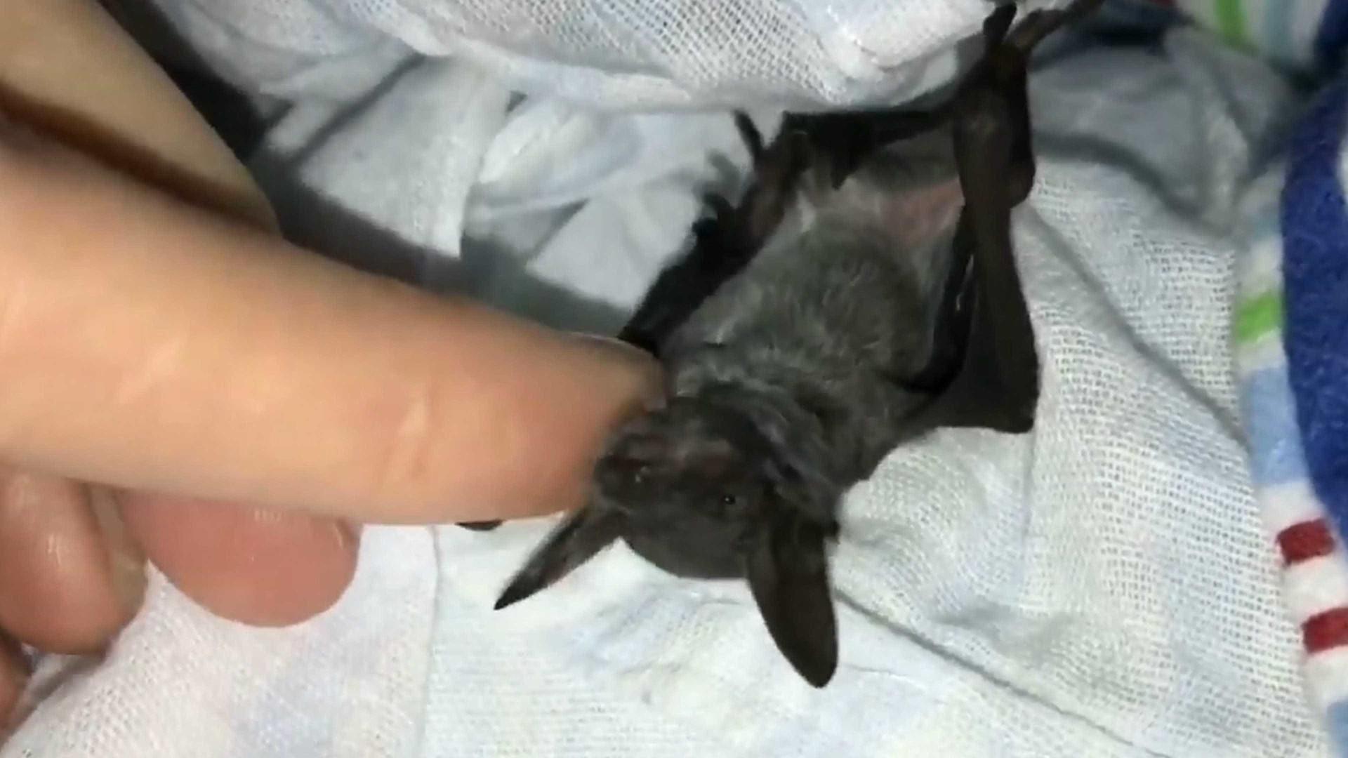 Homem é mordido por morcego no Rio e enfrenta dificuldades em hospitais