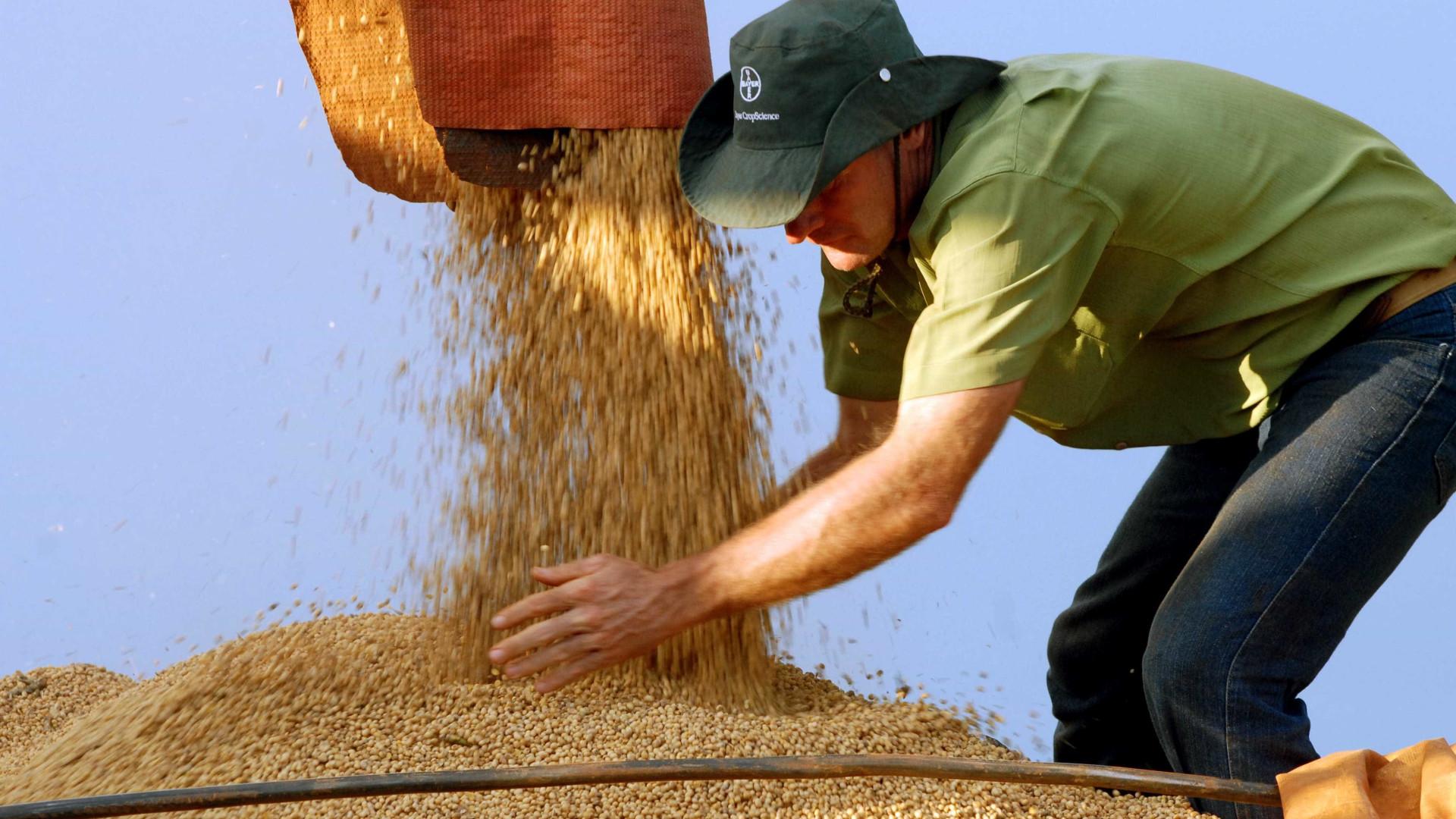 IBGE reduz estimativa de queda da safra para 6% neste ano