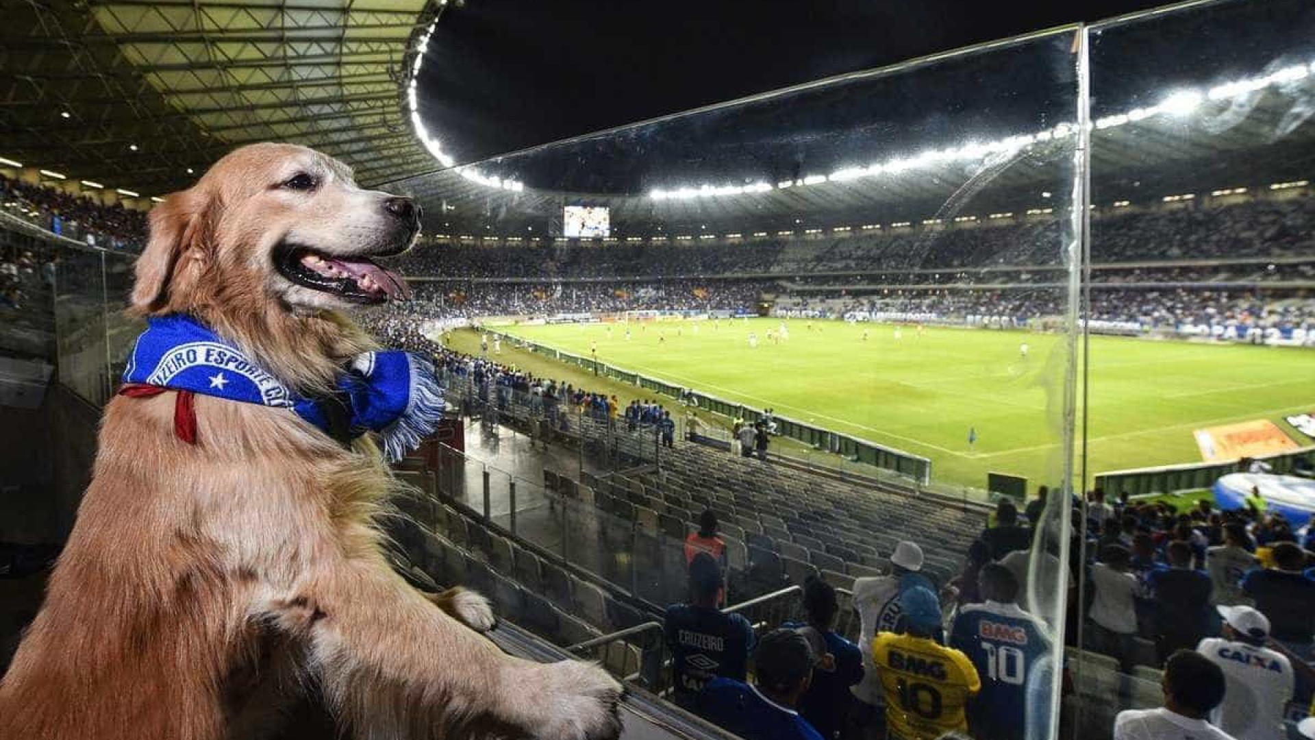 Mineirão libera entrada de cachorros na torcida durante jogos