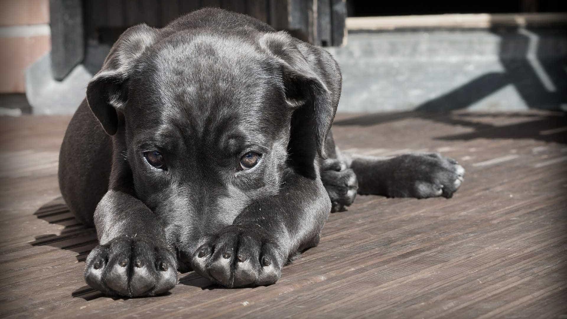 Universitário abusa sexualmente de cadela  e é procurado pela polícia