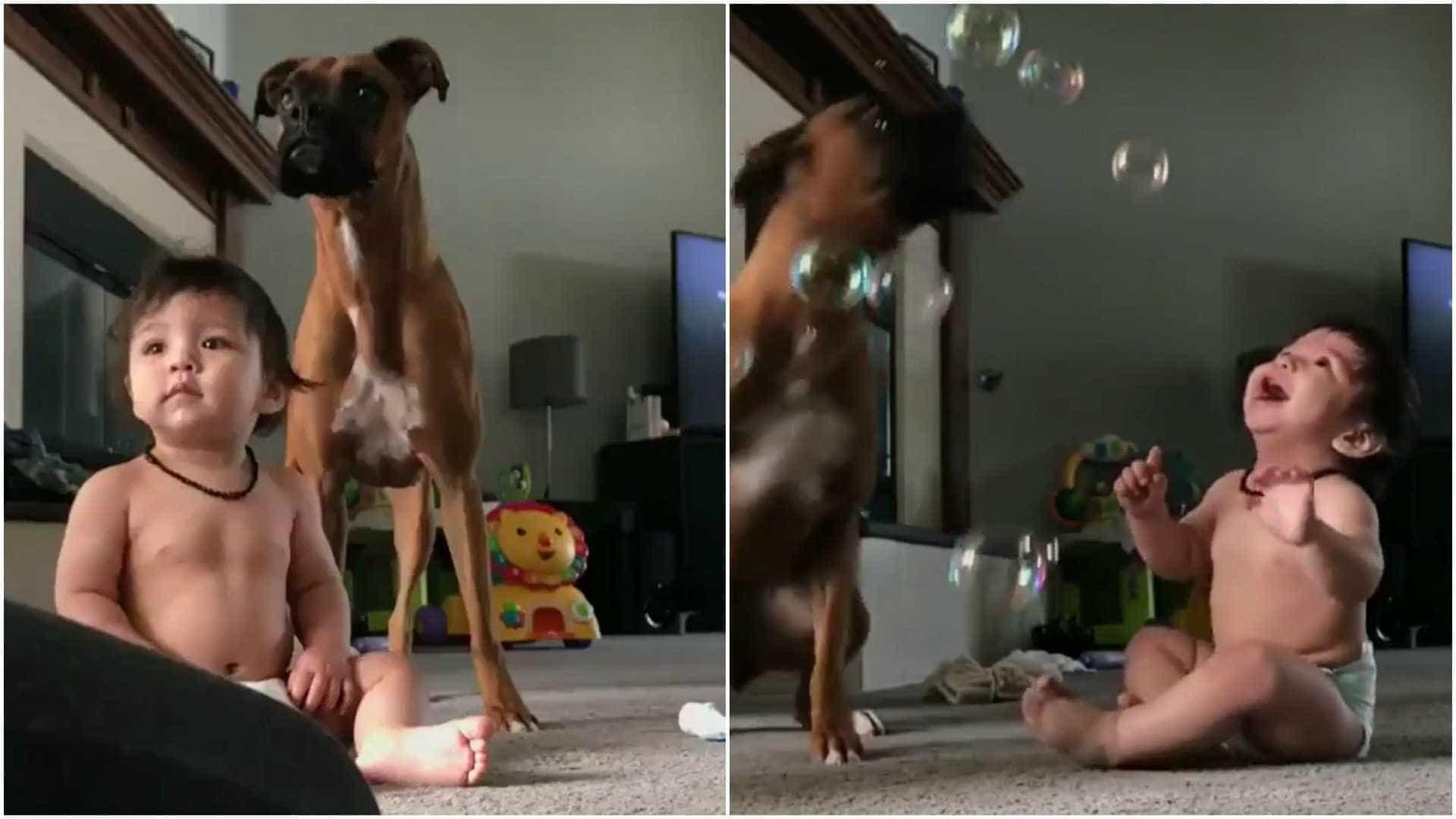 Bebê, cão e bolas de sabão: a combinação que vai alegrar seu dia