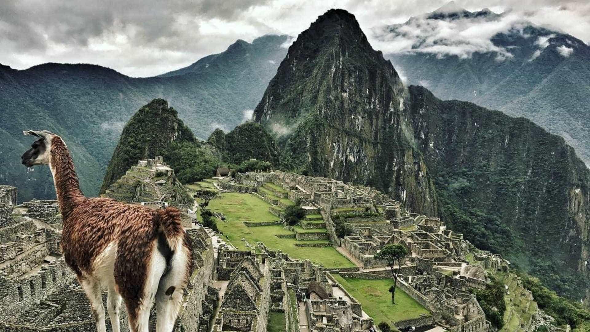 Machu Picchu: a cidade Inca perdida do Peru