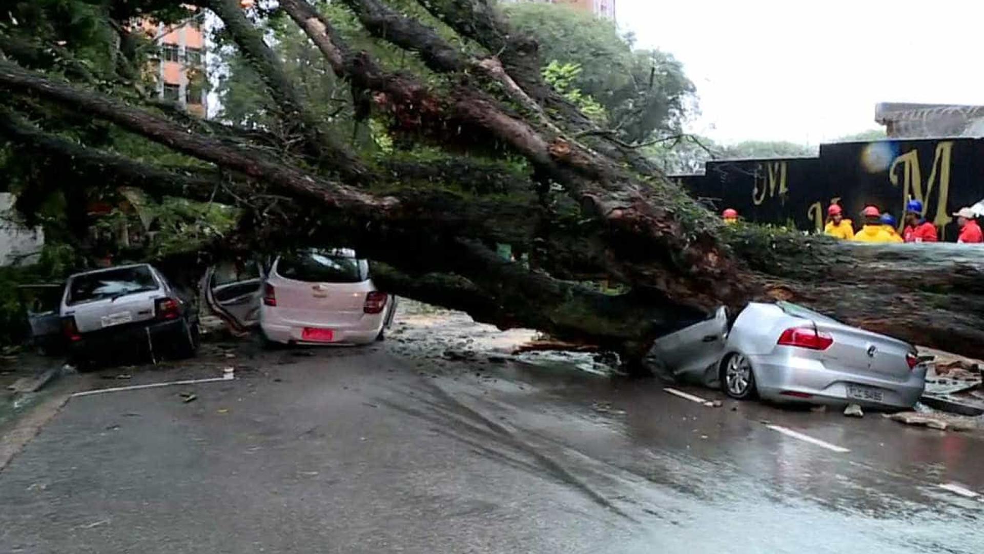 Queda de árvore esmaga carros na capital paulista
