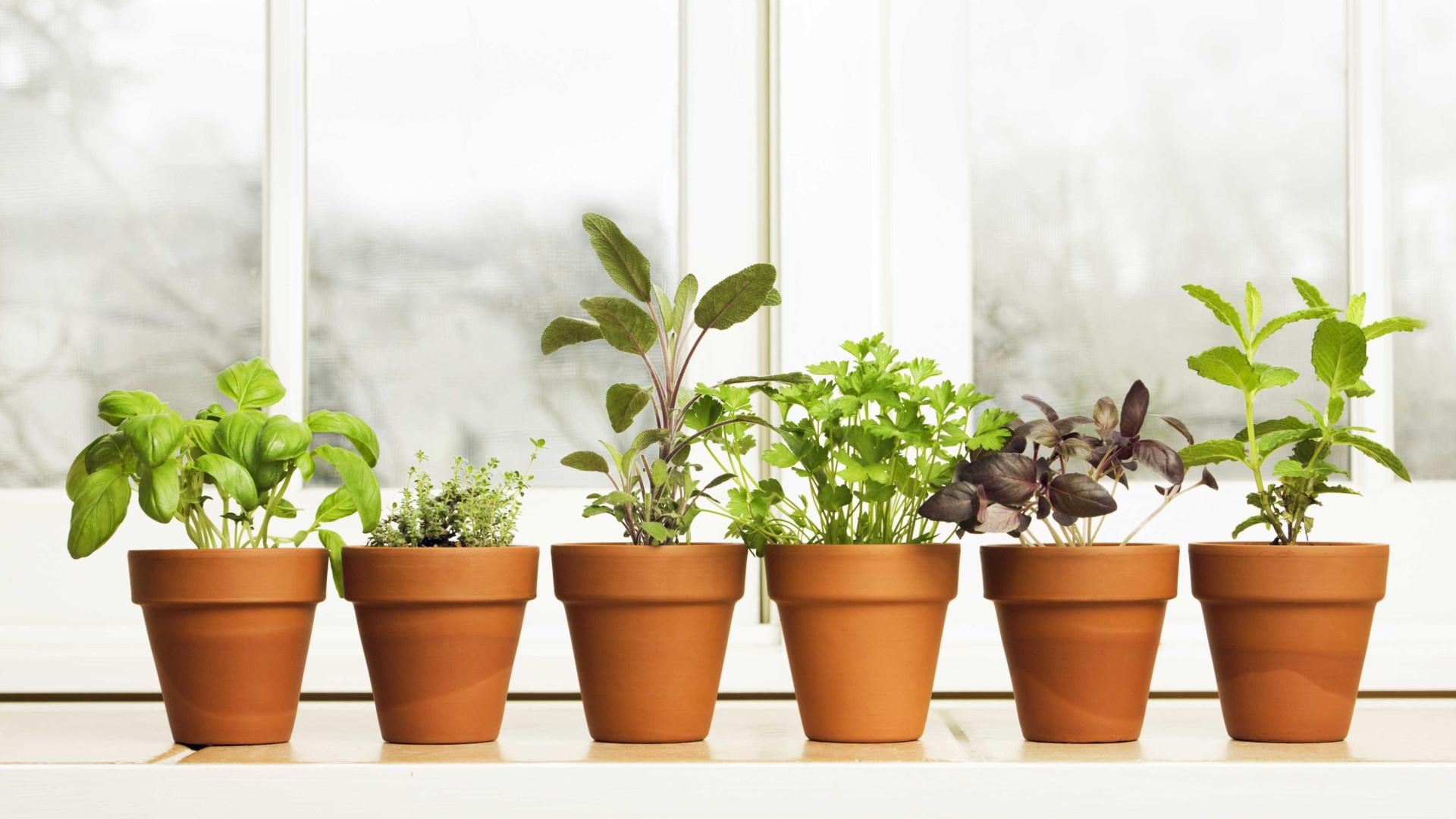 Veja como ter plantas, flores e temperos em qualquer lugar da casa