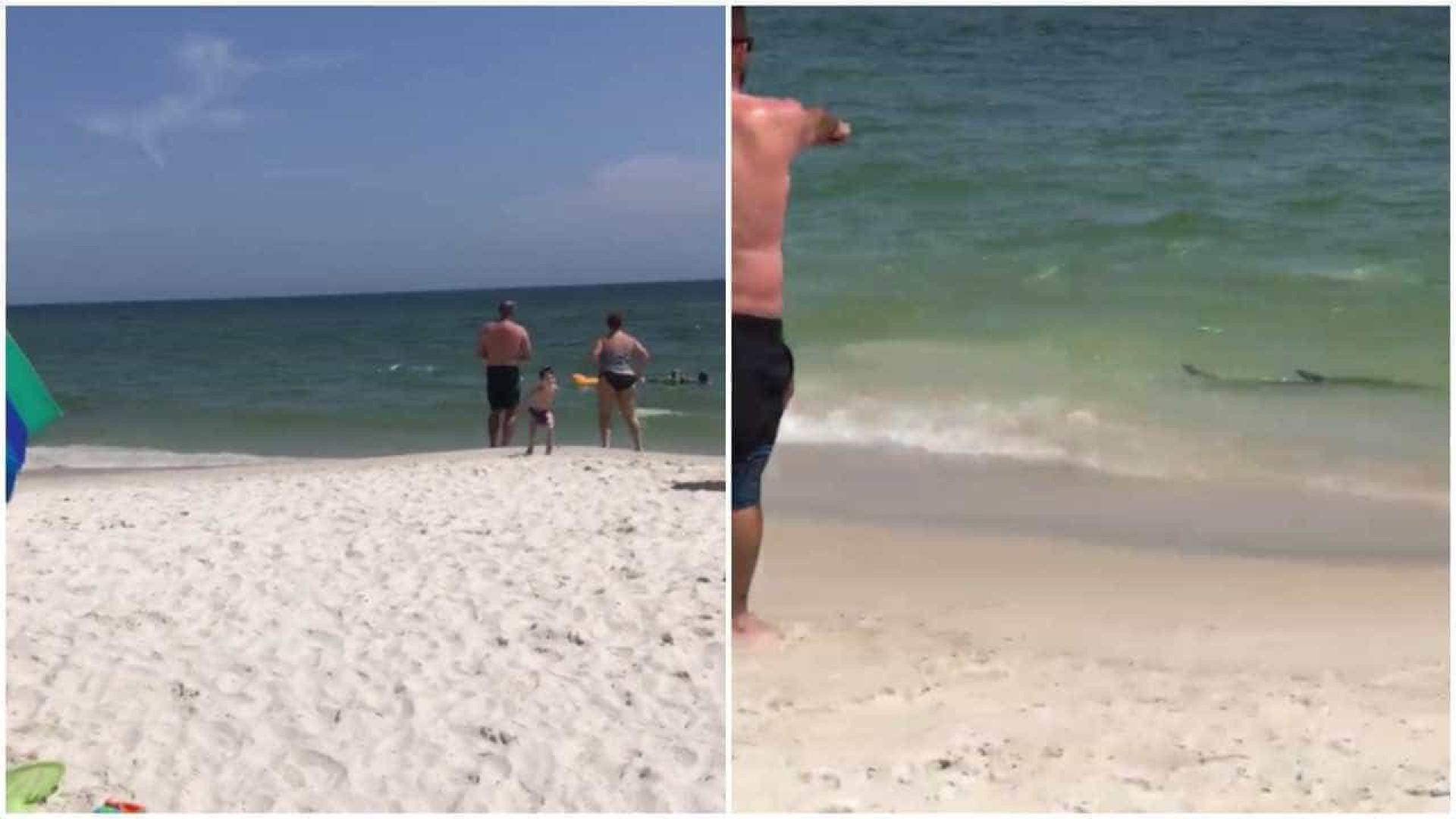 Tubarão se aproxima de costa e gera pânico no Alabama