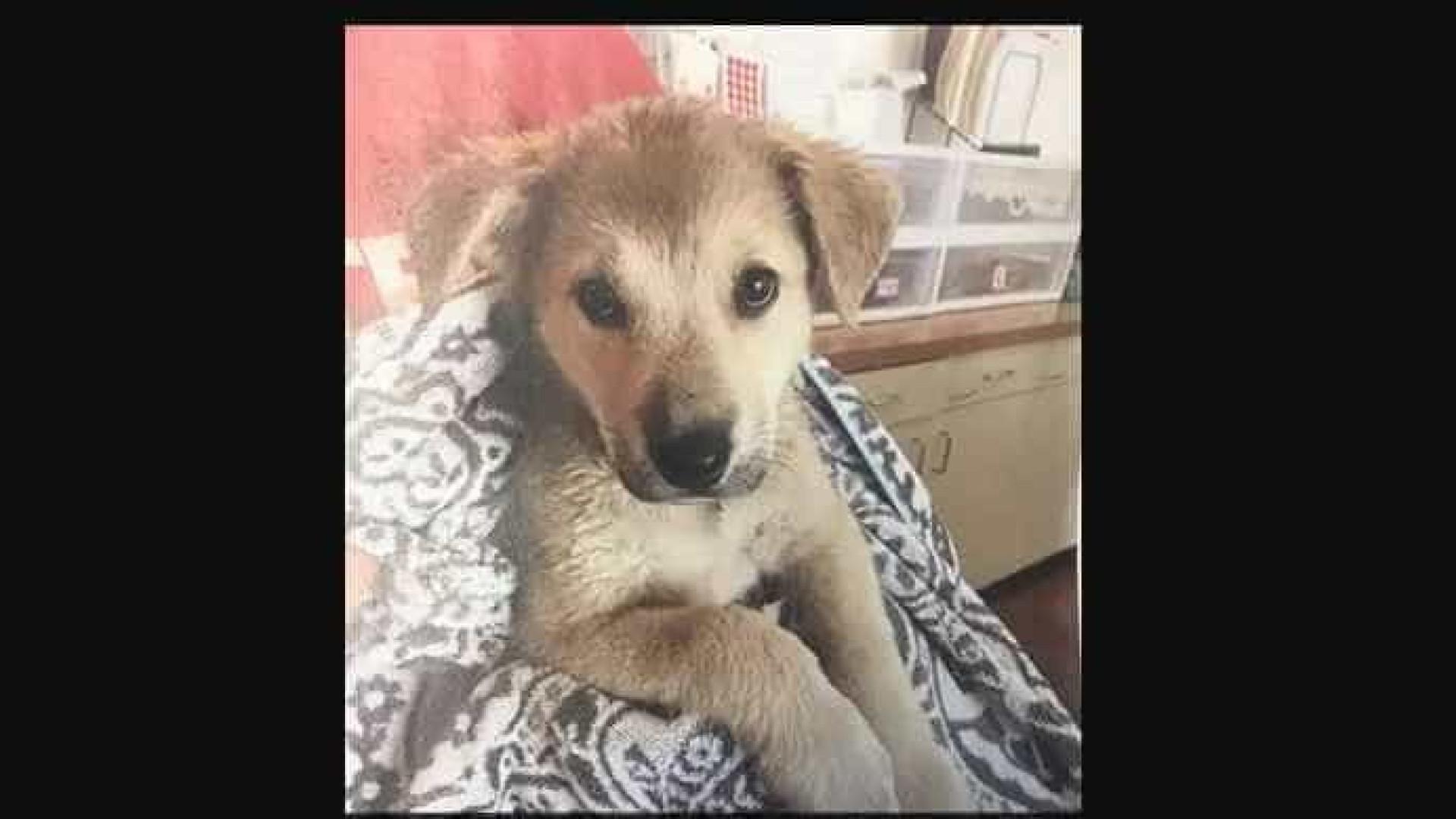 Cachorra é resgatada após meia hora em carro a 40º C
