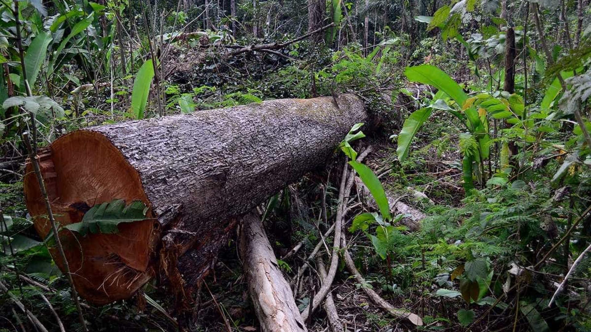 Temer veta corte, mas vai propor nova redução de floresta no Pará