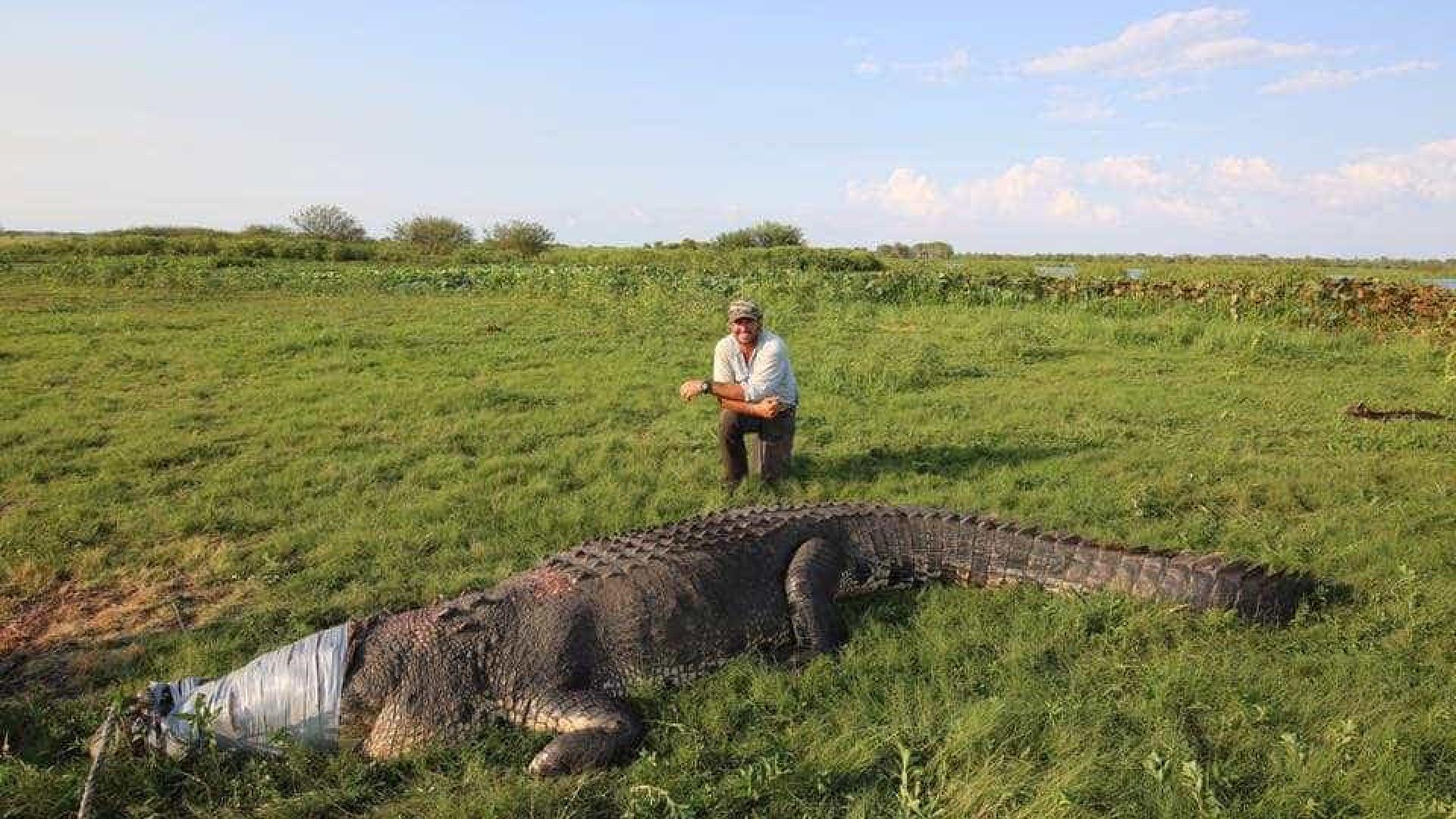 Crocodilo de 500 kg ataca câmera de aventureiro na Austrália