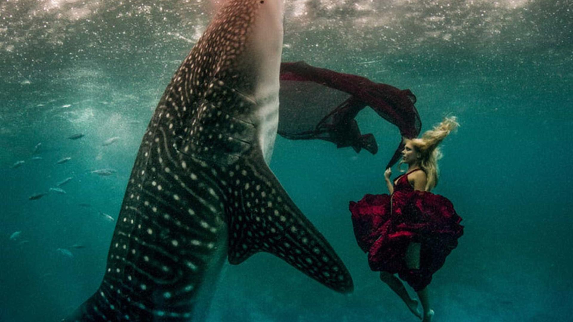 32 registros subaquáticos de literalmente tirar o fôlego!