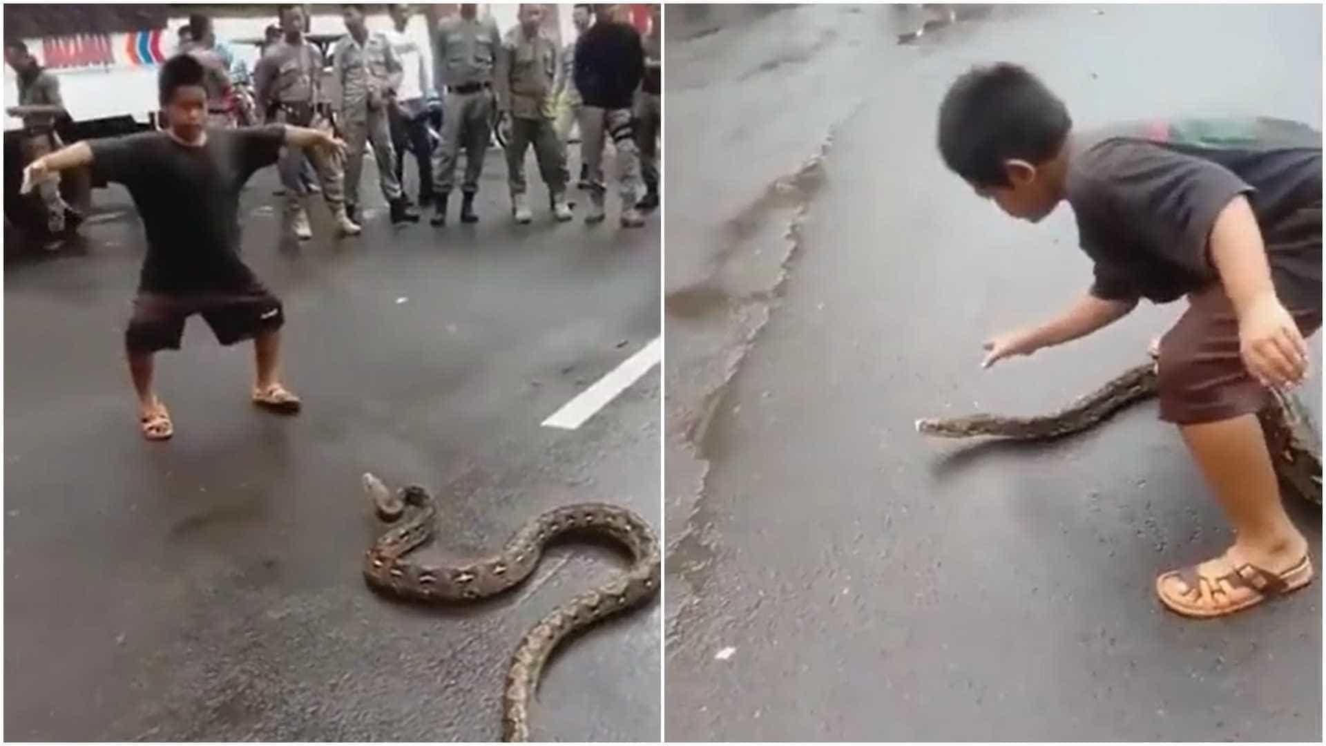 Criança domina cobra gigante com as mãos na Indonésia