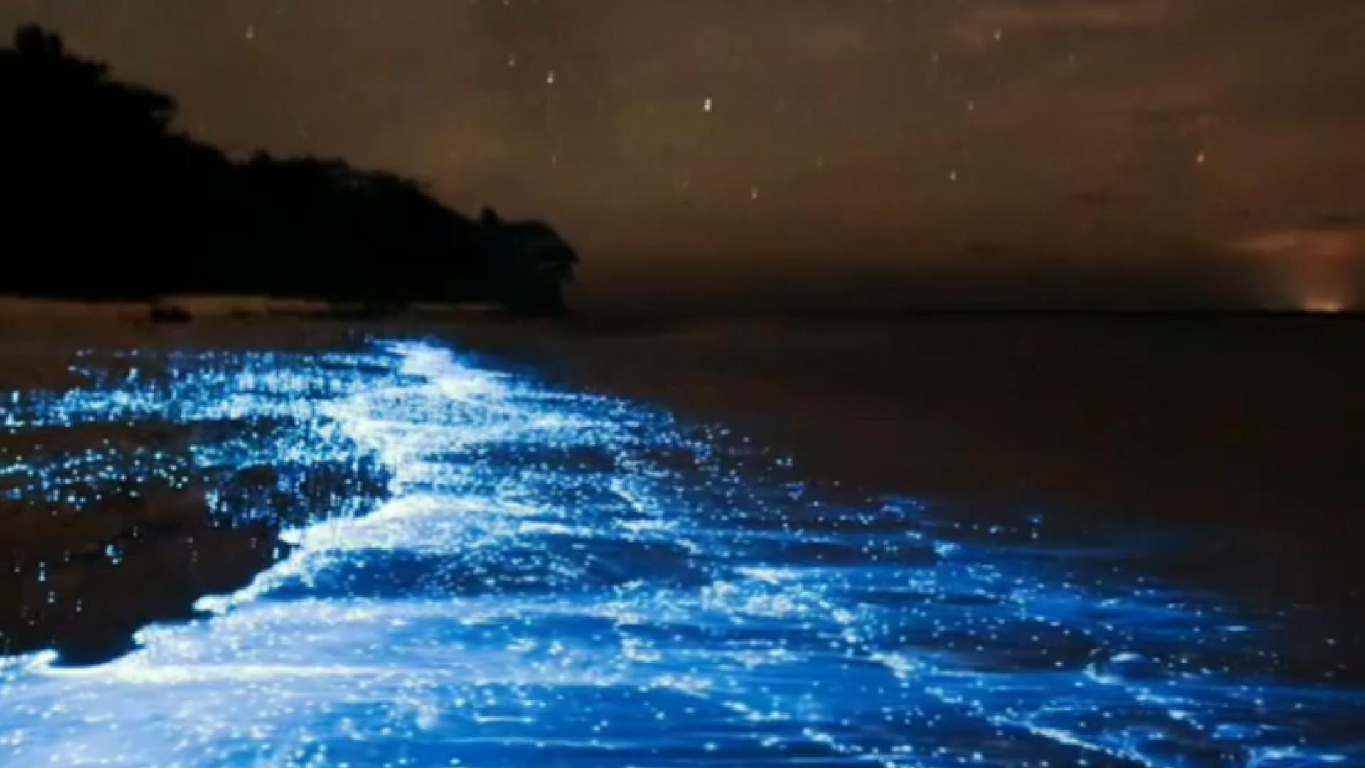 Confira um espetacular 'mar de estrelas' nas Maldivas