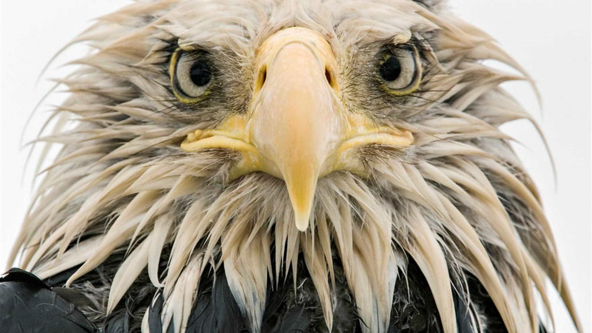 A vida selvagem em forma de imagens impactantes e impressionantes
