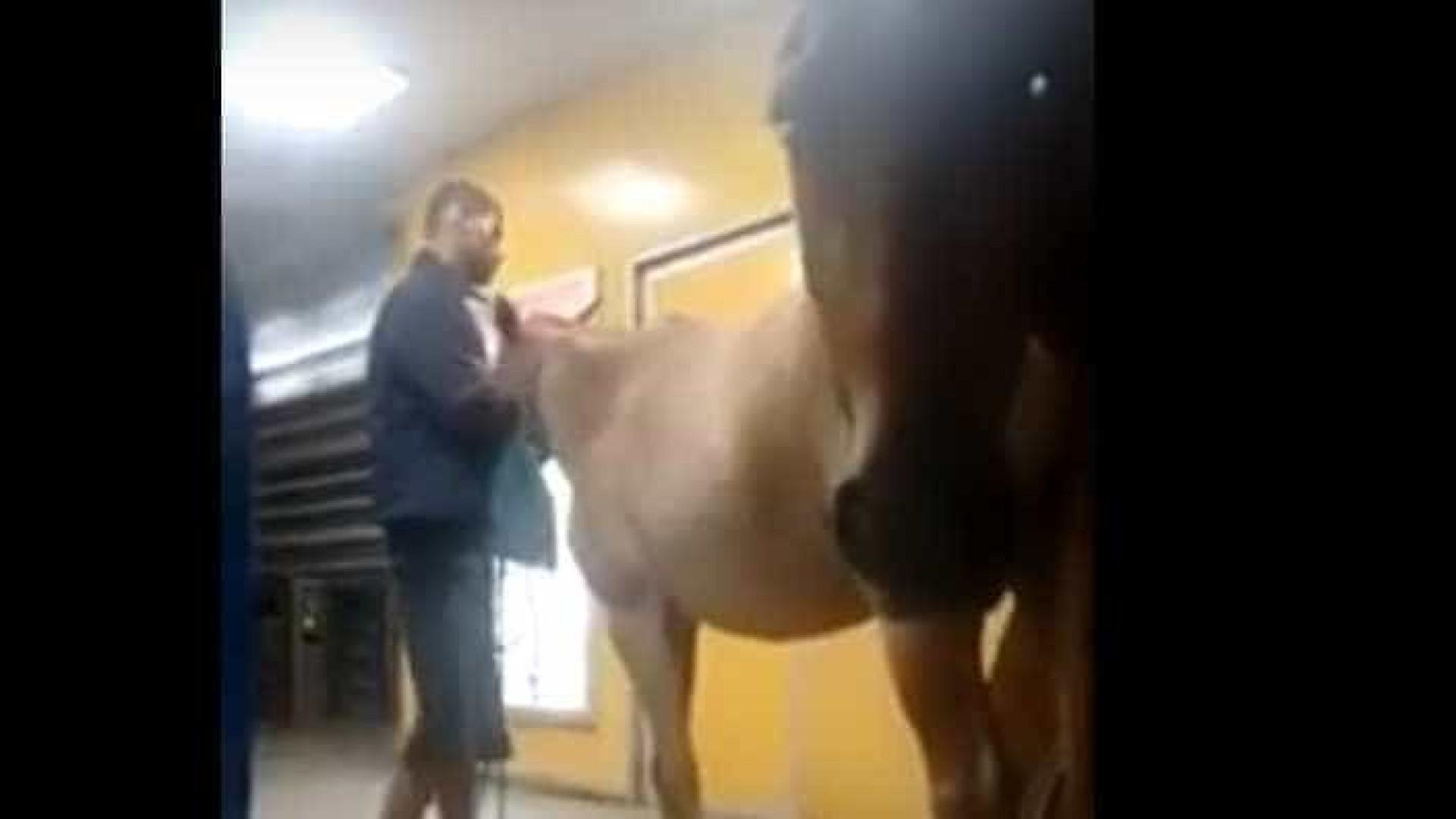 Homem tenta entrar com três cavalos em ônibus no Rio; assista