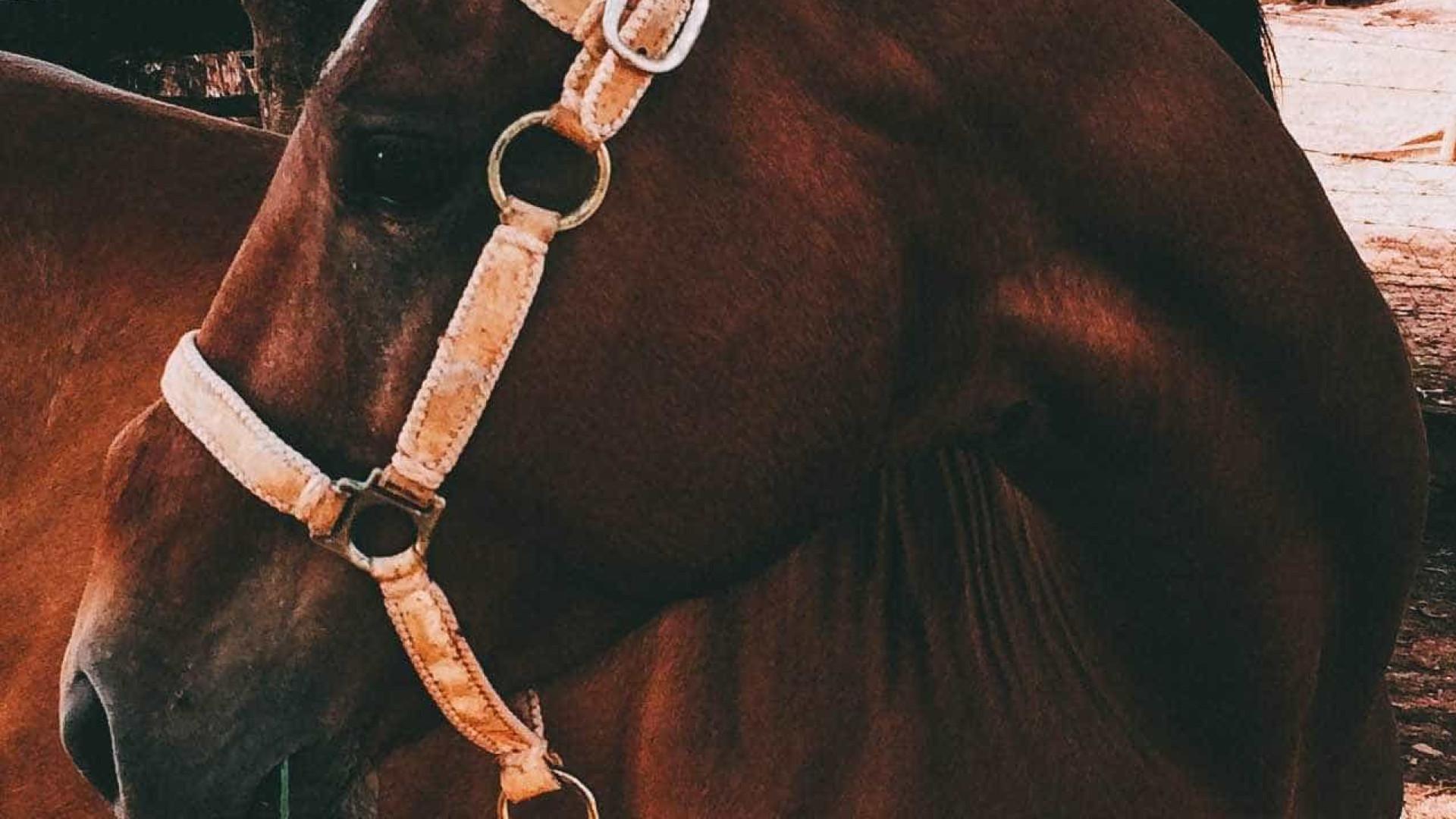 Cavalo é 'preso' após dar coice em carro: 'crime de dano'