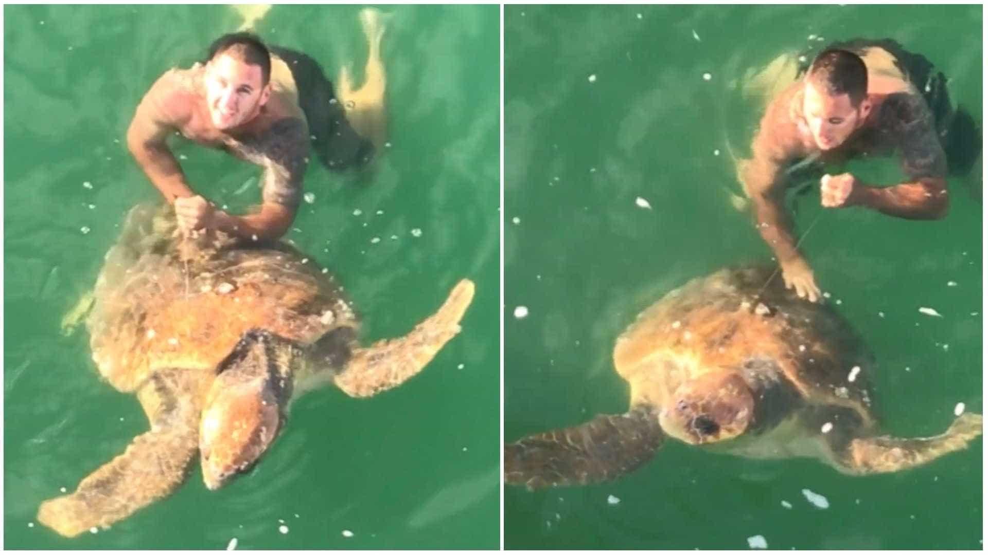 Tartaruga gigante é resgatada após ser fisgada por anzol