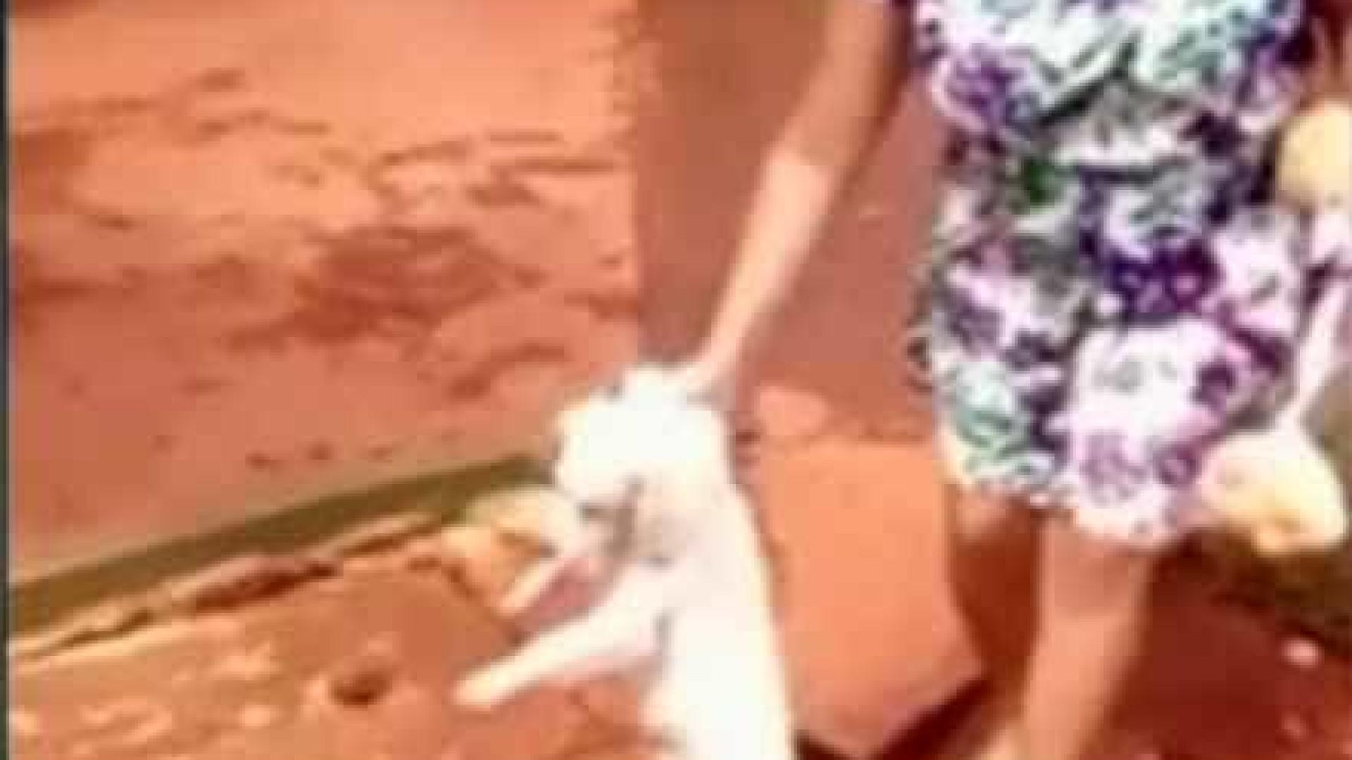 Mulher joga cão em bueiro no interior de Goiás