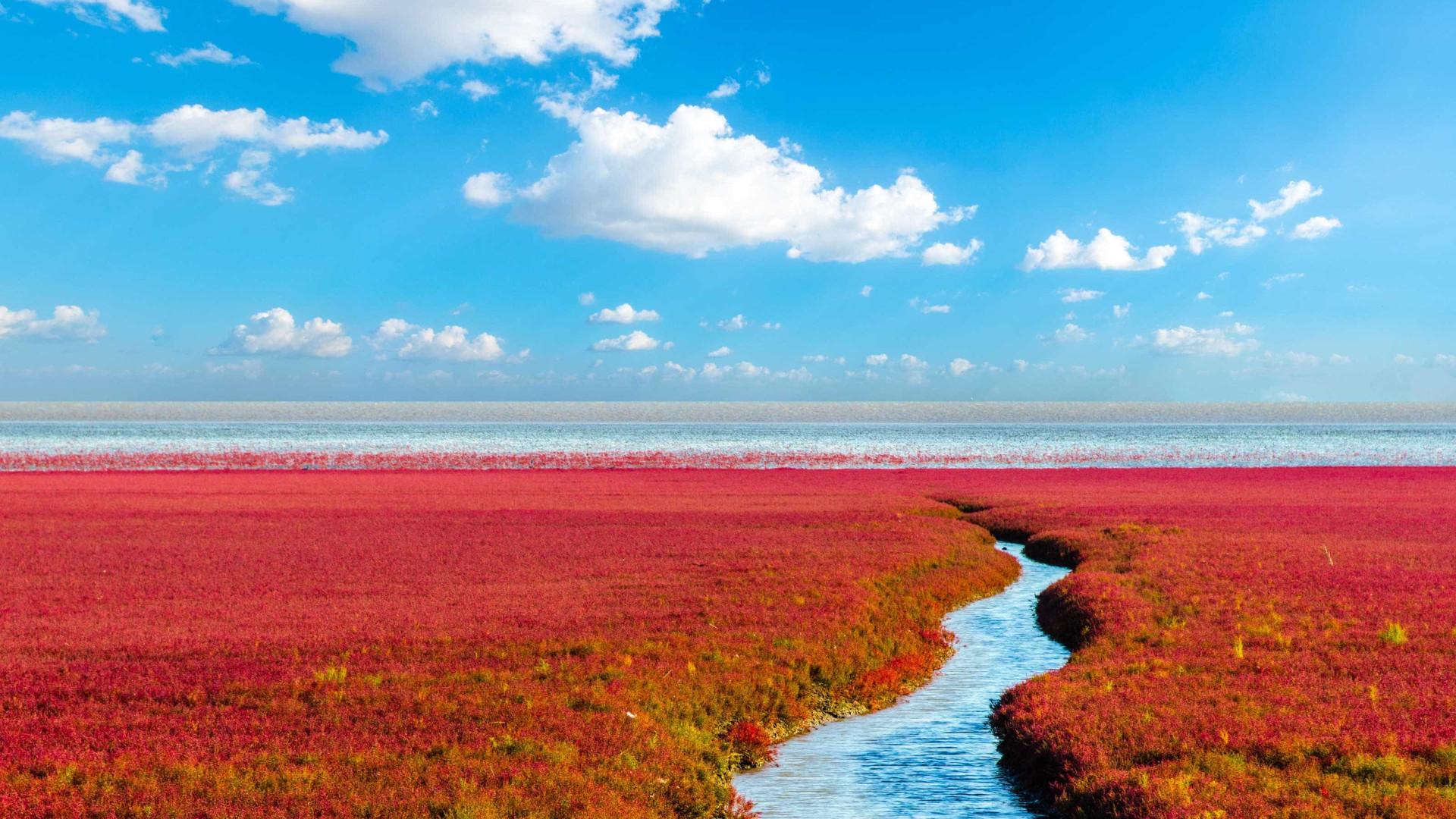 Praia na China possui cor avermelhada; descubra o porquê