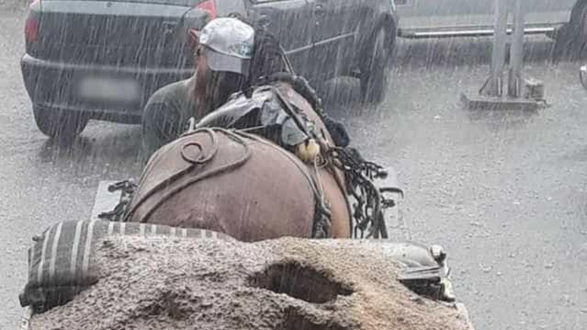Homem protege cavalo na chuva e viraliza: 'Meu melhor amigo'