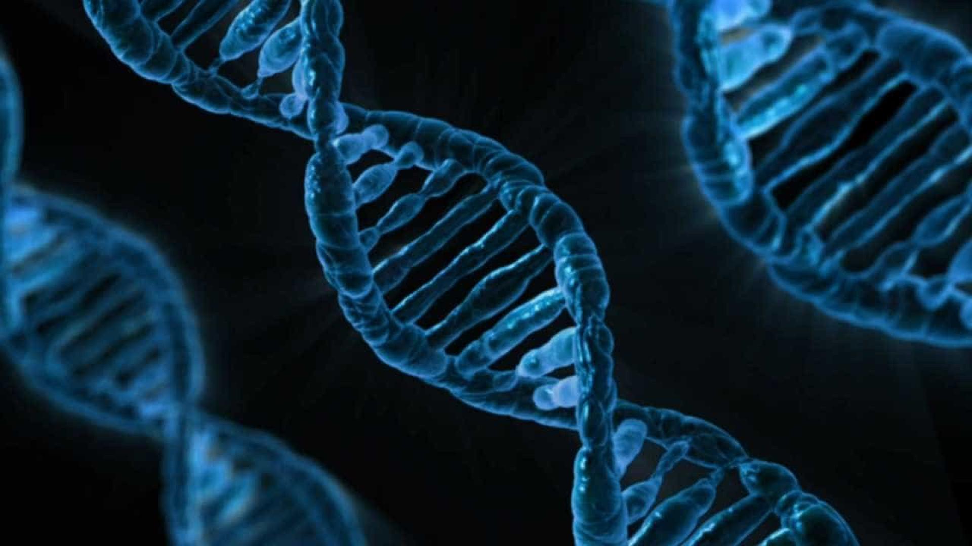 Cientistas criam 1º embrião de ovelha com células humanas