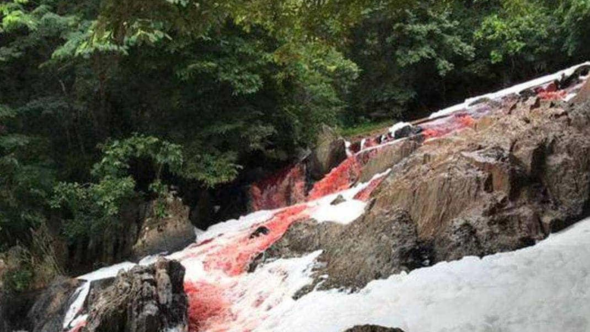 Caminhão tomba e carga de sangue de gado escorre pelo Rio Vermelho