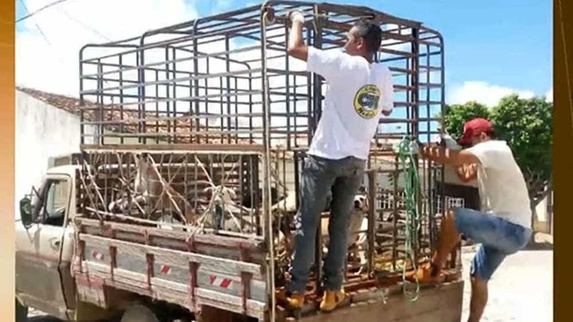 Secretário que autorizou matança de cães na Paraíba é exonerado de cargo