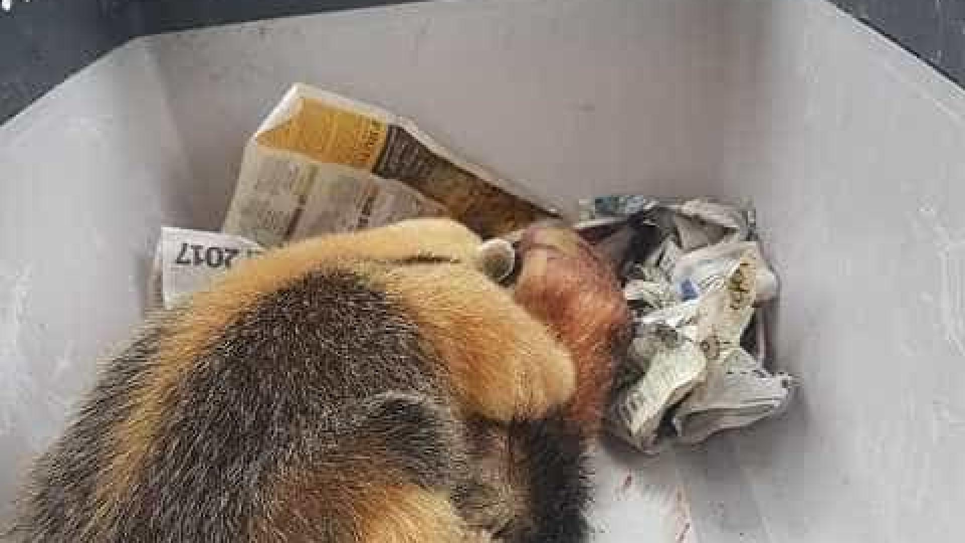 Filhote de tamanduá não desgruda da mãe morta atropelada em rodovia