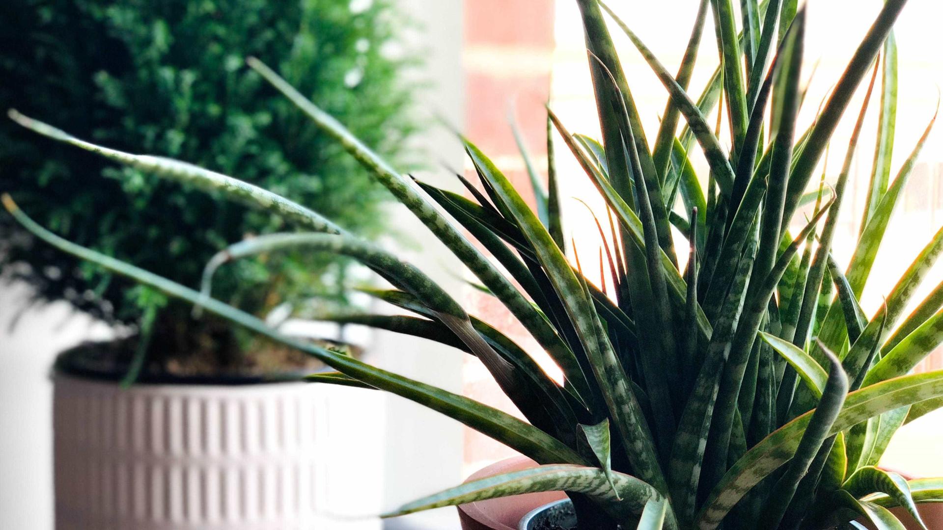 Conheça 5 plantas resistentes para quem não tem tempo de cuidar