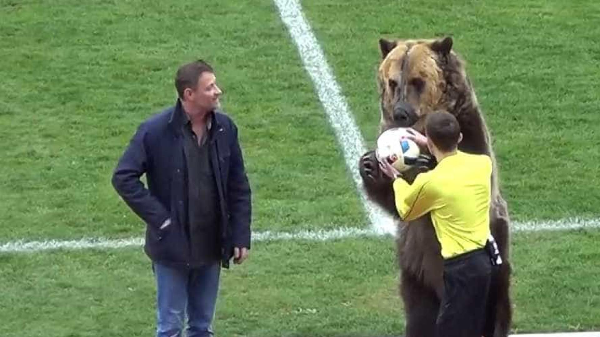 Urso chama atenção em jogo na Rússia e pode pinta na Copa