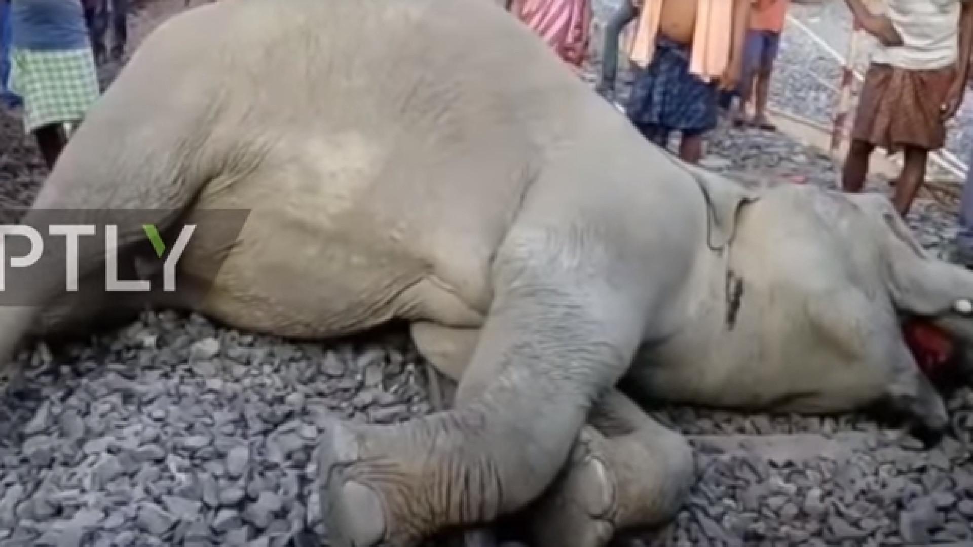 Elefantes morrem após serem atingidos por trem na Índia