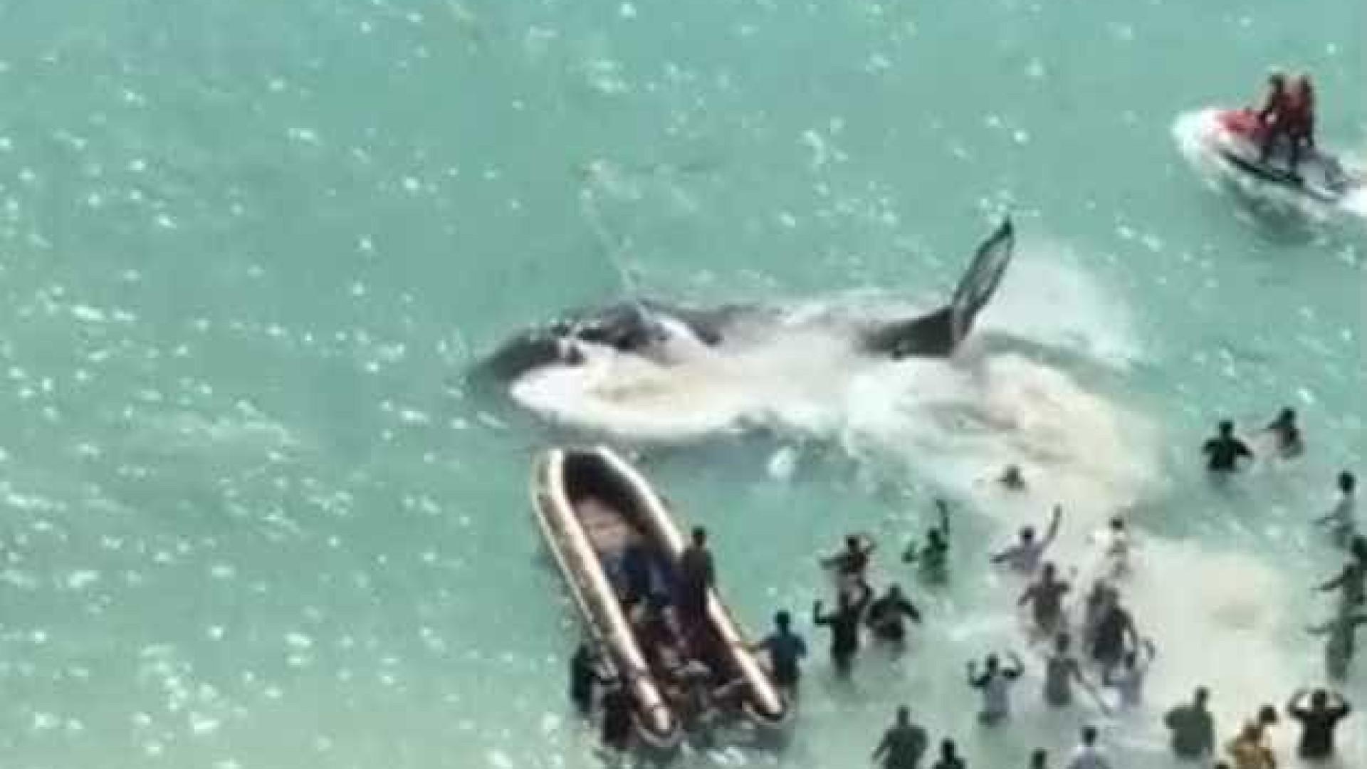 Brasileiros comemoram resgate de baleia no RJ